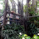 Casa na Árvore da Praça São Lourenço
