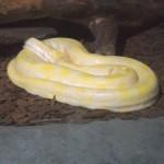 Cobra albina no Aquário de São Paulo