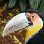 Pertinho assim, um dos diferenciais do Parque das Aves