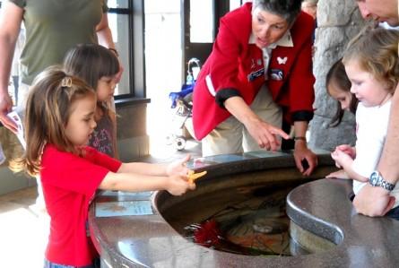 O rei da água: Monterey Bay Aquarium